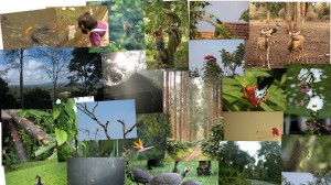 Nature at its best @Orange County, Coorg