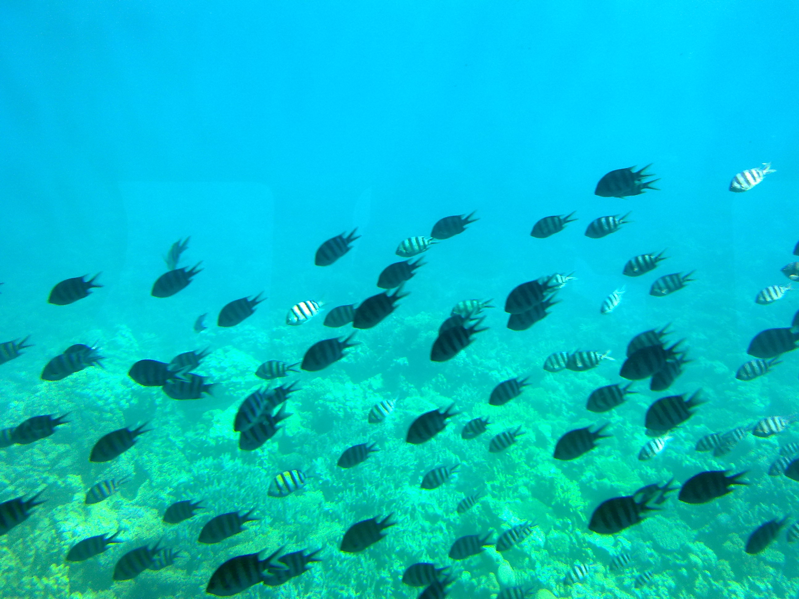 Fantastic underwater marine life in Red Sea