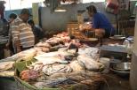 Kolkata Fish Market (2)