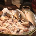 Kolkata Fish Market (5)